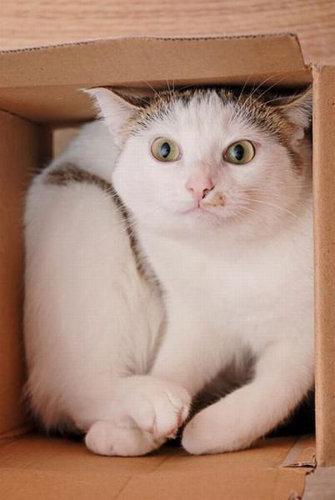 03箱や入れ物に収まった動物たち