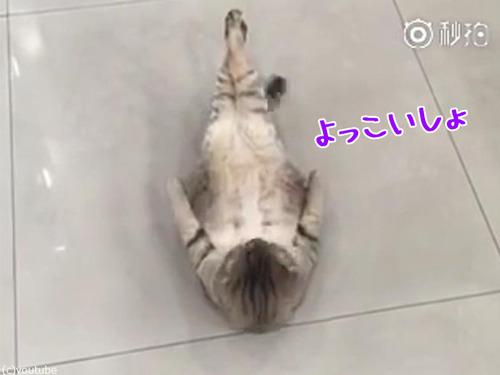 猫の腹筋00