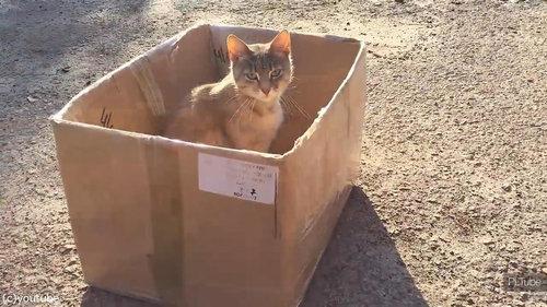 猫にダンボール07