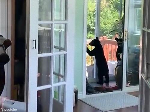 子クマ3匹が家の中に入り込んだ04
