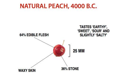 果物がどれだけ品種改良されたのか11