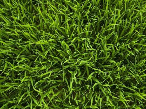 「芝生の長さは1インチ違うだけで…こんな違いが出る!」