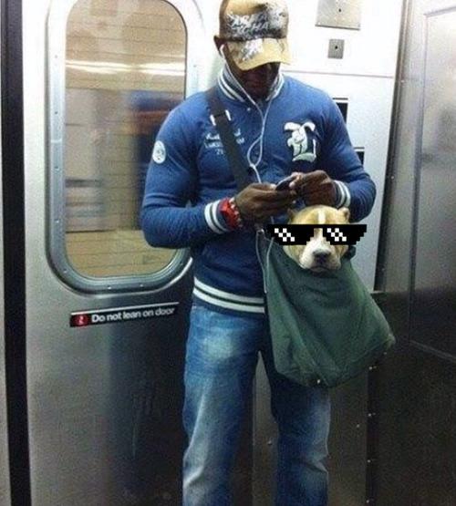 ニューヨークの地下鉄と犬04