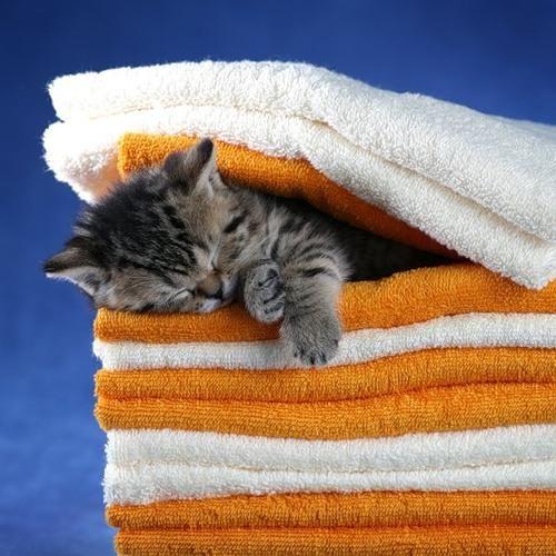 眠る猫04