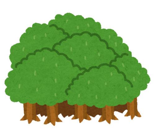 ヨーロッパはどれくらい森に覆われているのか00