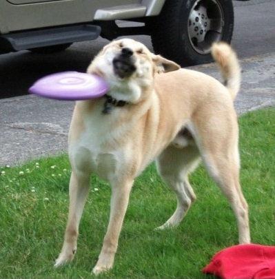 大きな犬のトラブル05