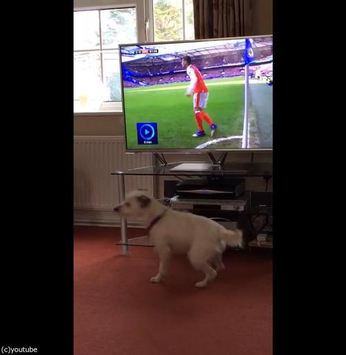 サッカーと犬04
