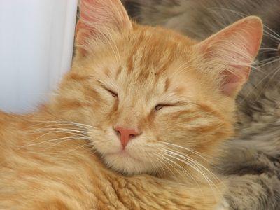 猫の画像 p1_40