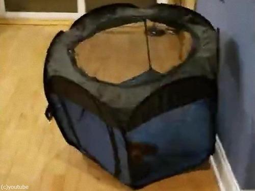 犬用テントの想定外の遊び方00