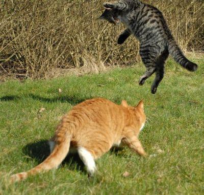 壮絶なる2匹の猫04