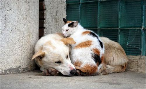 愛情いっぱいの動物04