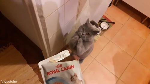 おねだり猫06