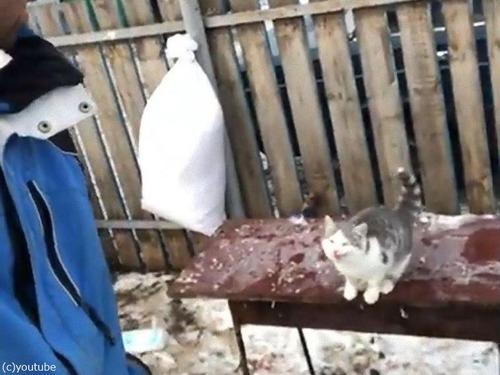 飼い主さんの肩に跳び乗ろうとした猫01