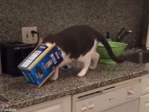 5人の飼い主に見捨てられた猫10