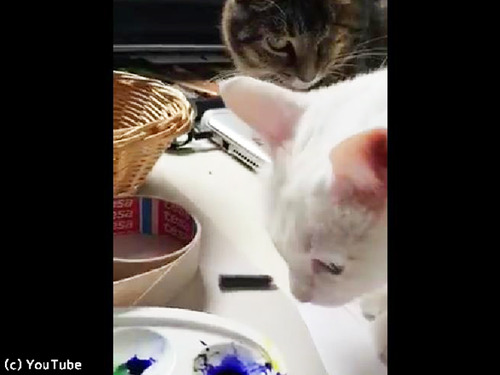 飼い主の代わりに猫を叱ってくれる猫00