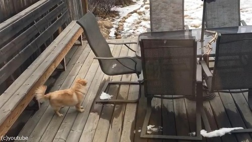 雪だるまが気になる犬01