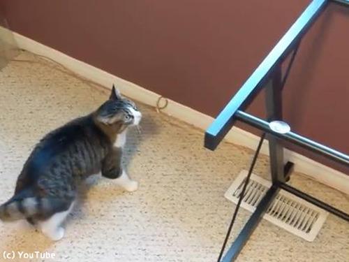 お気に入りの机の天板を外されて困惑する猫00