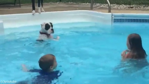 子どもたちから水遊びを教わるワンちゃん02