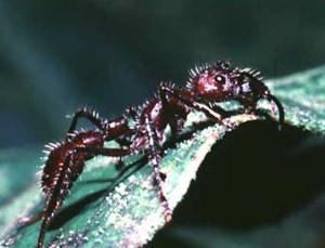 世界で最も危険な恐ろしい虫2-2