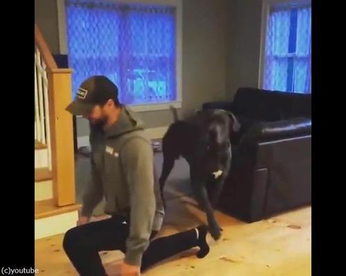 飼い主さんのエクササイズを真似っこする犬01