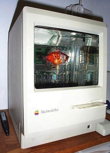 iMacと猫18