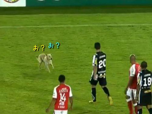 サッカーの試合中に犬乱入