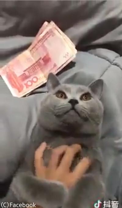 お金を見せると触らせてくれる猫04