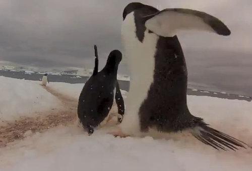 ペンギンロード03