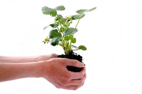植物が土と水にどんな影響を与える