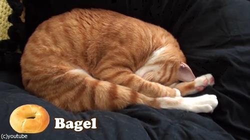 猫をパンにたとえると05