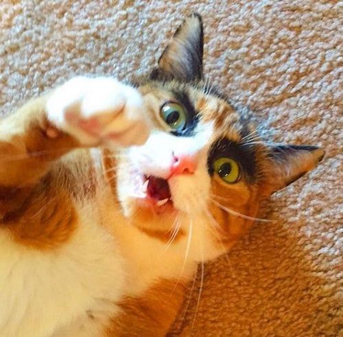 本気の猫13