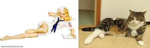 猫のポーズ11