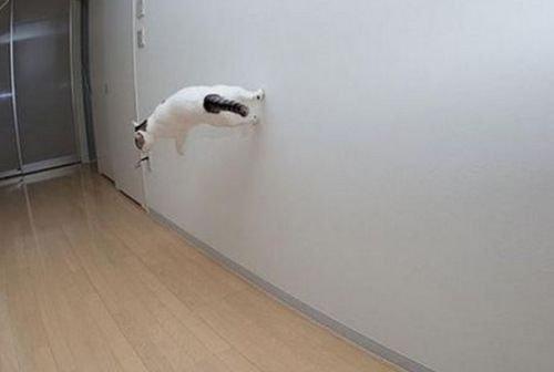 現実をくつがえしている猫01