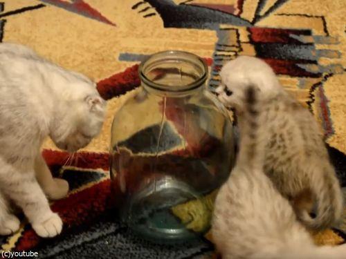 ビンの中の子猫08