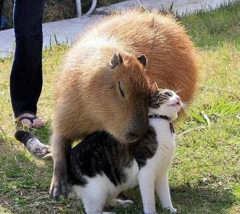 他の動物と仲良くする猫02