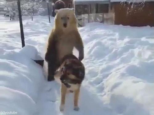 クマ「がおークマだぞぉー!」 犬「知ったこっちゃねー」06
