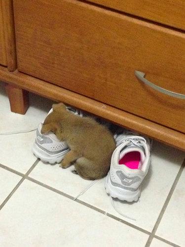 子犬はどこでも寝れる10