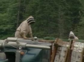 1200万匹のハチがトラック横転で逃げ出す-01