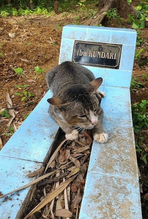 飼い主の墓に1年も居座り続ける猫01
