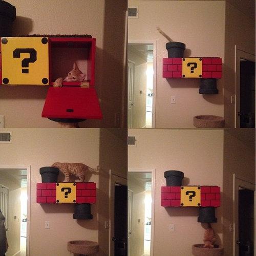 スーパーマリオな猫の遊び場10
