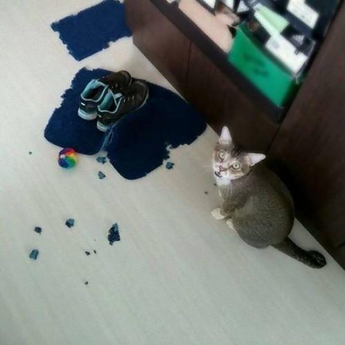 猫に敗北した人々11
