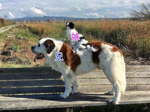 親友を背中に乗せる犬00