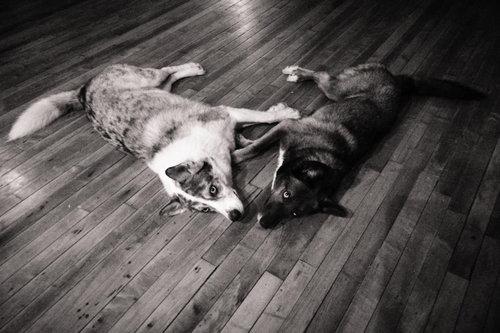 犬の親子が愛を体現してるとき04
