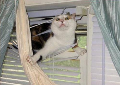 この家に猫がいる理由05
