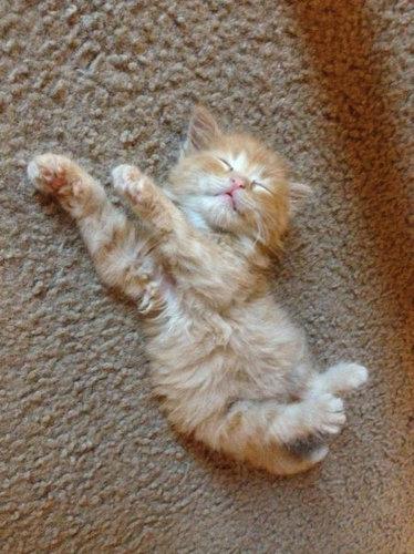 10スヤスヤぐっすり寝る動物たち