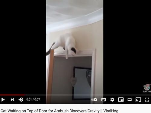 待ち伏せ猫