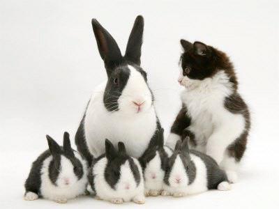 毛並みがいっしょの猫と犬とウサギの写真17枚:らばQ