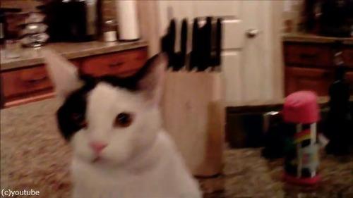ドローンで猫撮ってみた02
