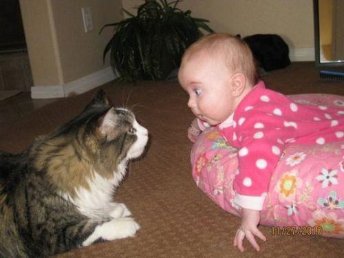 ペットと赤ちゃん04