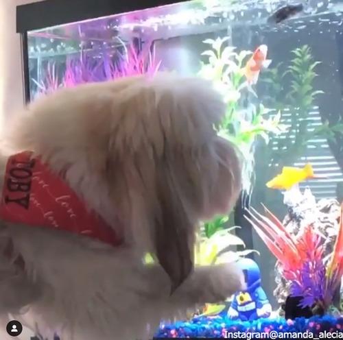 愛犬に水槽を見せたら…02